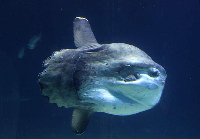 морские животные в аквариумах