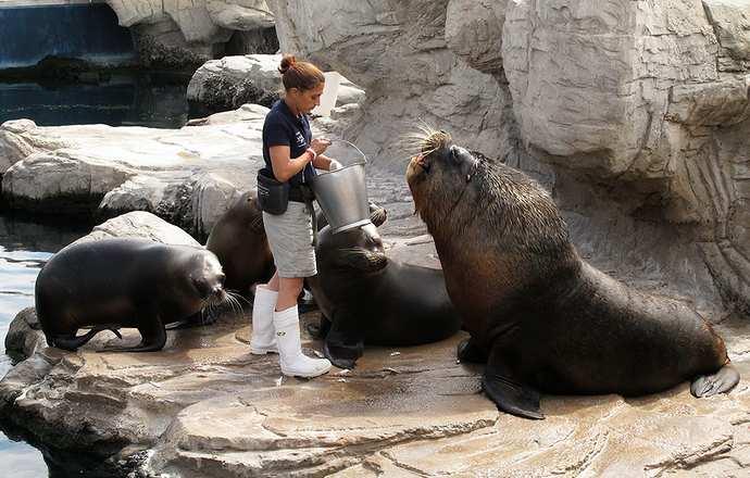 животные, живущие на территории океанариума Валенсии
