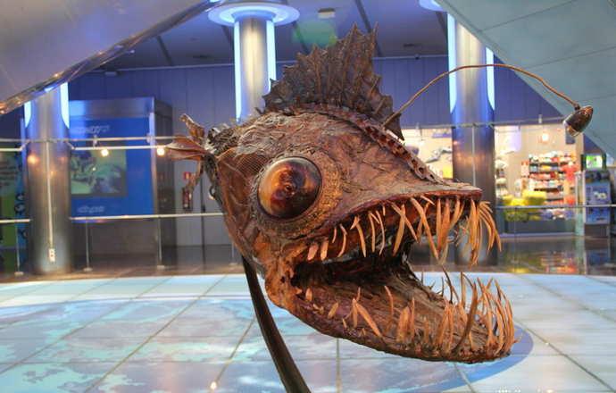 инсталляции в павильонах аквариума