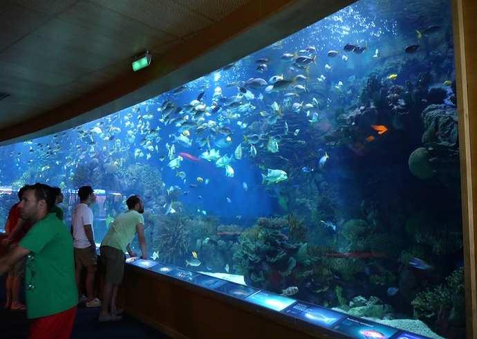 oceanografico valencia tropical-seas