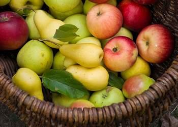 какие фрукты можно при грудном вскармливании