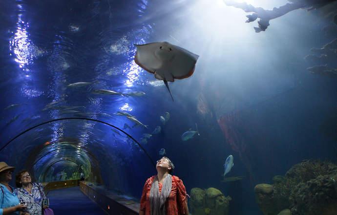 экспозиция морских животных в океанариуме в валенсии