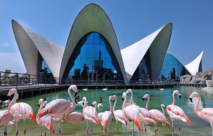 розовые фламинго океанариума Валенсии